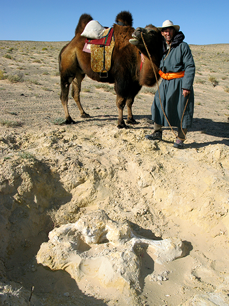 Discovery of a dinosaur skeleton while riding across the Gobi desert on my camel Earli Har