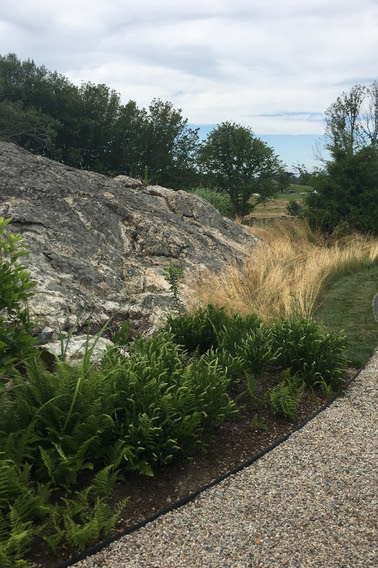 A planting of native junipers and fescue grass along the approach to the garden...
