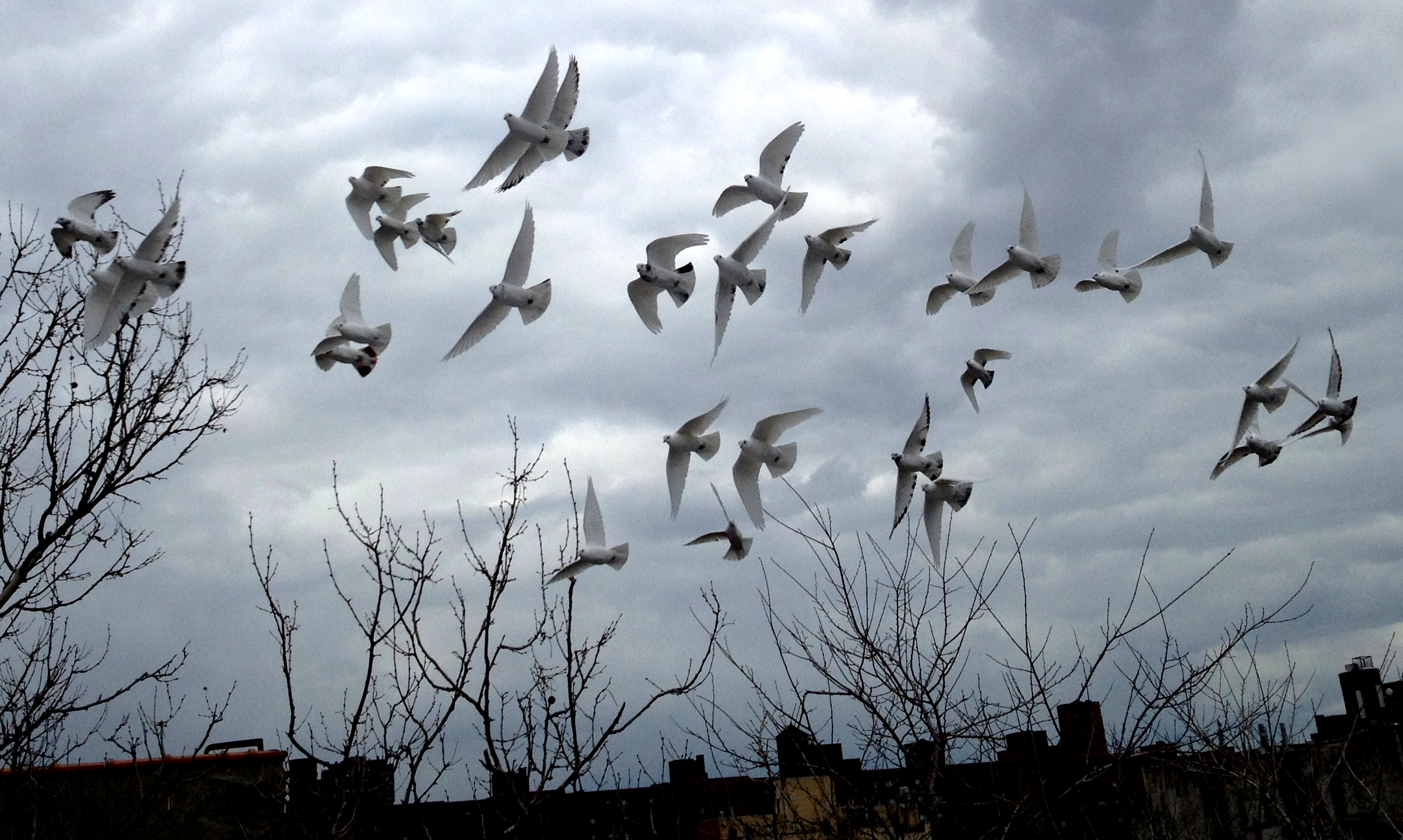 Anton's Birds.jpg