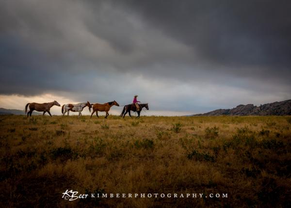 3 Horse Train