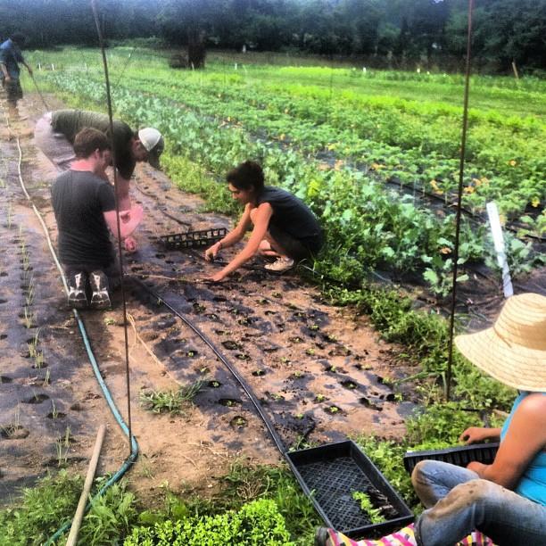 Chris Coffey and Clint Zugel planting cilantro on a break from rehearsal. #nbd #spaceonryderfarm  (at Ryder Farm - Upper Field)