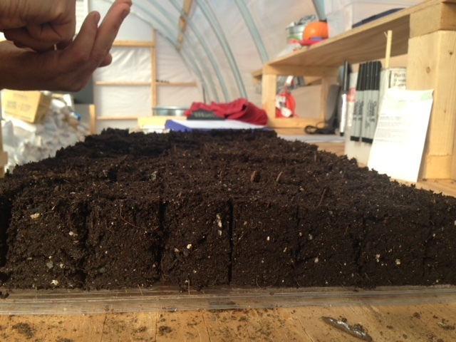 Seeding alliums into soil blocks -- scallions, fresh onions, storage onions, shallots, and leeks. It felt like a lot, so I did a quick spreadsheet check. Yes: 30+% of the year's greenhouse seeds just went in. These are multi-plant blocks, though -- 4-10 seeds per cell, depending -- so at 30 trays, it would equate to roughly 200 trays of squash. Ha.