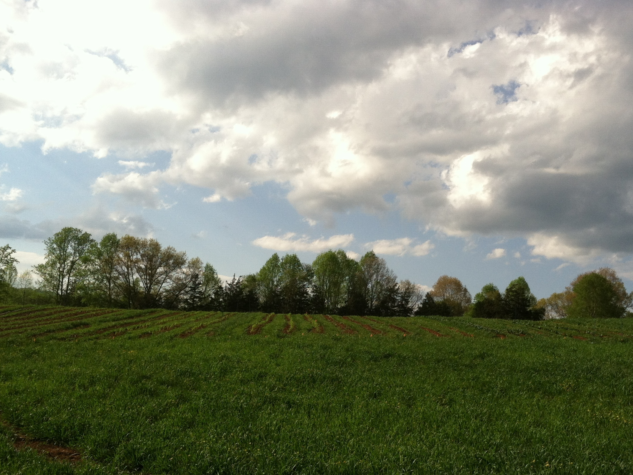 Verdant, was the word I had in mind when I designed the farm. And, Buoyant.