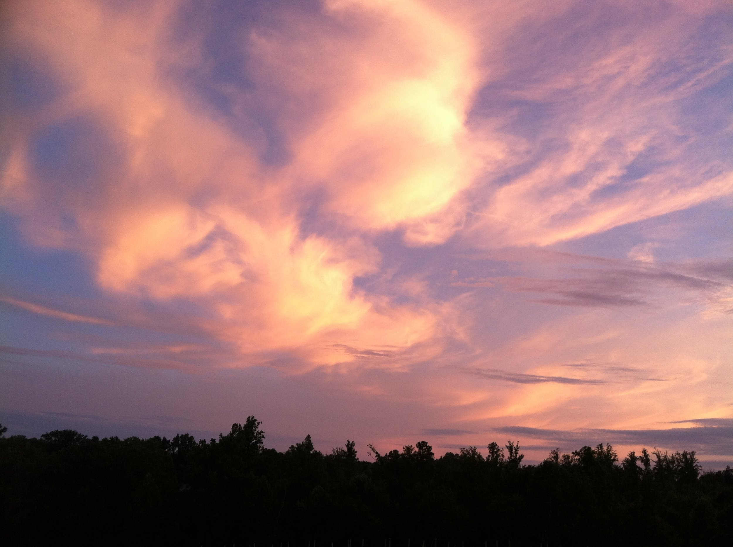 """""""Thank God they cannot cut down the clouds,"""" was how Thoreau said it. Evening over the tomatoes."""