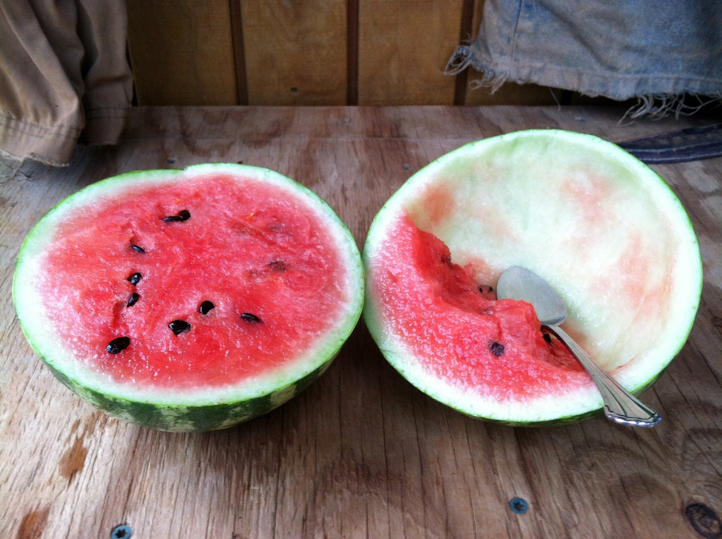 'Quetzali' sliced for easy eating. If I did not mention it in person, this is the easiest way to turn an 'icebox' watermelon into snack. For the record, the watermelons we have in the field this year are: 'Blacktail Mountain,' 'Early Moonbeam,' 'Cream of Saskatchewan,' 'Sugar Baby,' 'Sweet Dakota Rose,' 'Quetzali,' 'Orangeglo,' and 'Moon & Stars.'