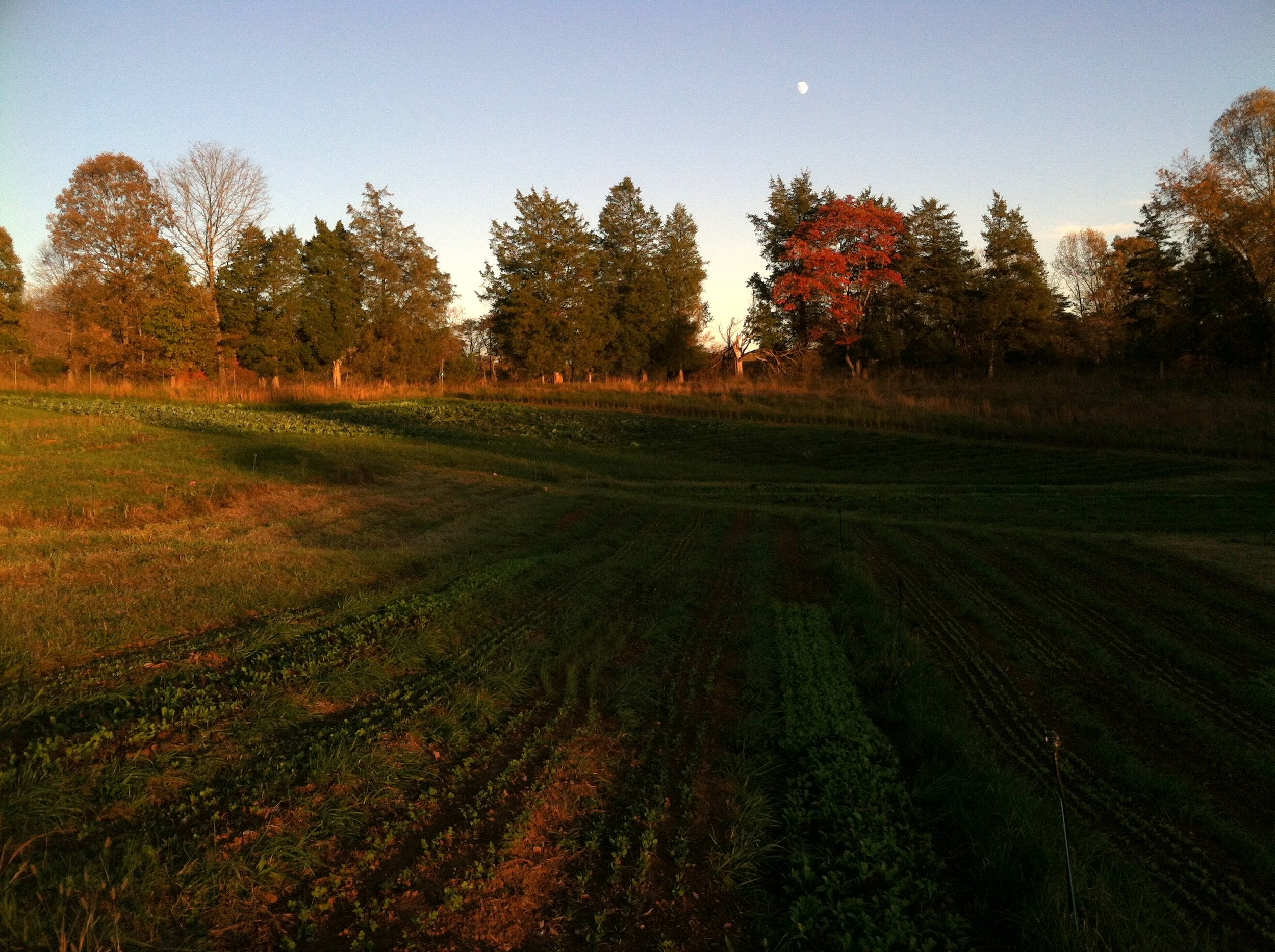 Autumn sunset crawls up the farm.