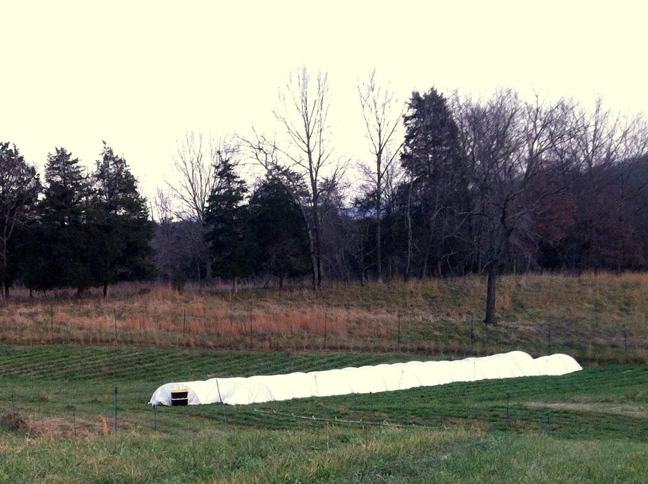 An ugly shot, but these are two quick hoops up for the winter. Some 15-inch ground posts plus 10-foot EMT bent to size, means a crawl-able tunnel for winter greens. When the farm is fully up and running, we'll have 5 hoops for the winter -- in the grain rotation and following a spring/summer fertility cover crop. Some of the advantages to these small movable hoops are: reduced cost, soil health in rotation, natural rain water and leaching as opposed to salt-buildup from well water, rotation-based fertility, disease reduction in rotation, and relatively easy future expansion.