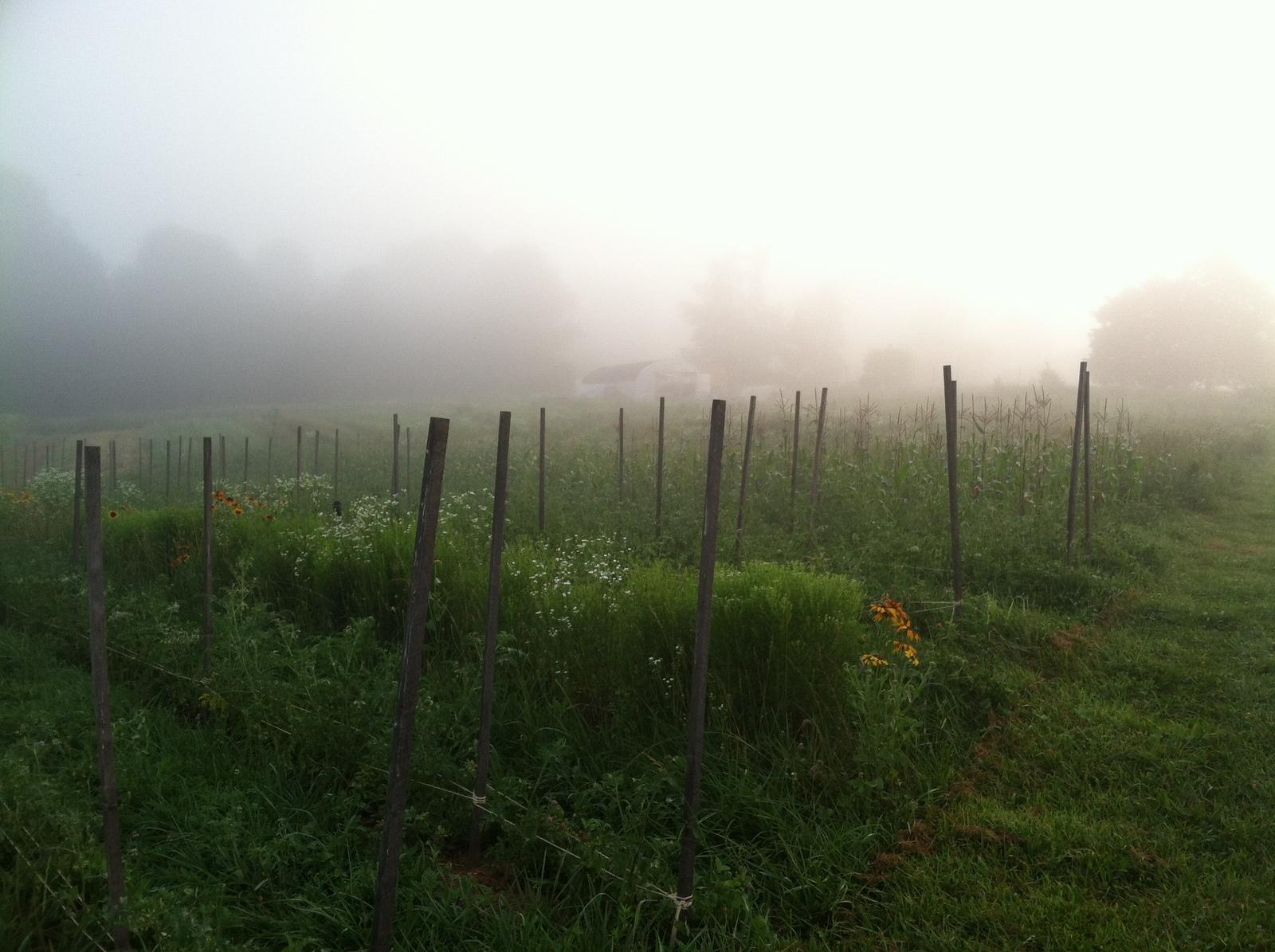 Good morning farm. :)
