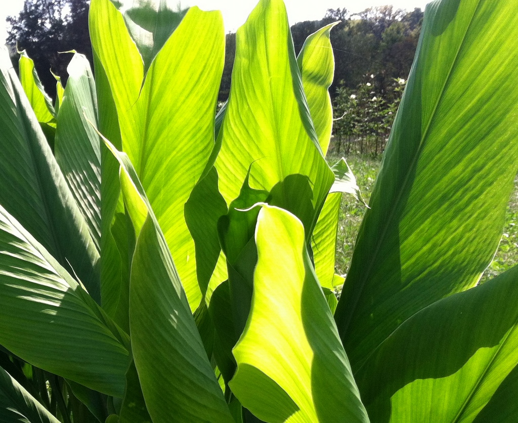 Turmeric being turmeric. I think of  canyon wave striations  …