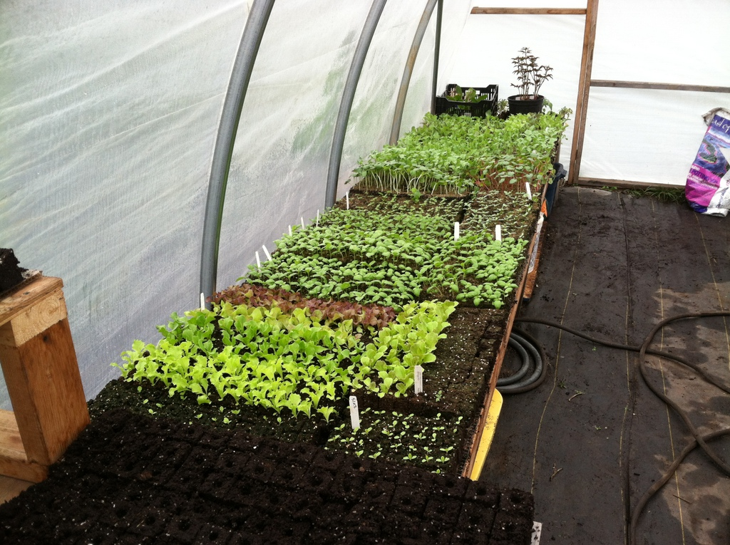 Last year looks much like this year, but for the basil, which I have seeded later, to skip the late frosts.
