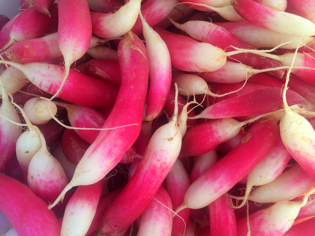 Because who doesn't marvel at a good French Breakfast radish?