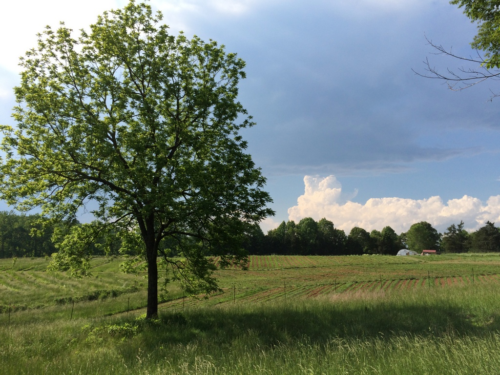 I walked the perimeter with the mower the other day, and was pleasantly surprised by several 'new' views of the farm. It's always nice to step outside the fence. That cumulonimbus turned thunderhead broke about an hour later.