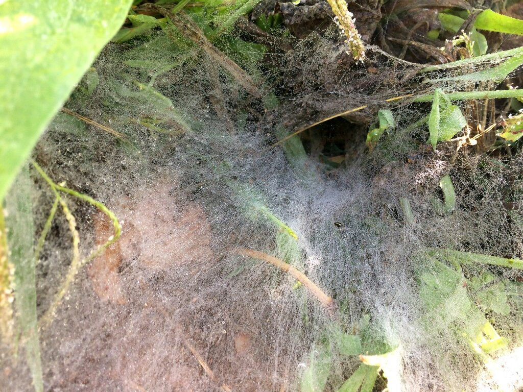 If you look carefully, there's a grass spider in there.