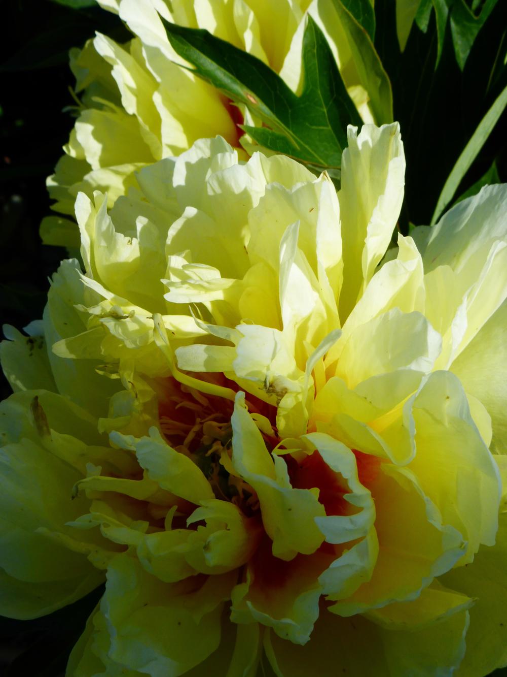 TPAC_flowers_2.jpg