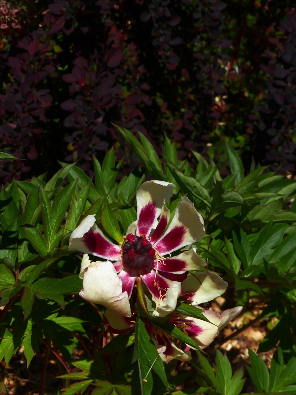 TPAC_flowers_3.jpg