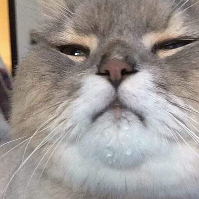 Maybe your weekend's been good. Maybe it's been kak. Either way, it can DEFINITELY be improved with this photo I found on Reddit of someone's cat with water drops on its tiny lil double chin. Lawd. On the opposite end of this spectrum, if you're looking for a downer, google what Tara Reid is doing in 2019.
