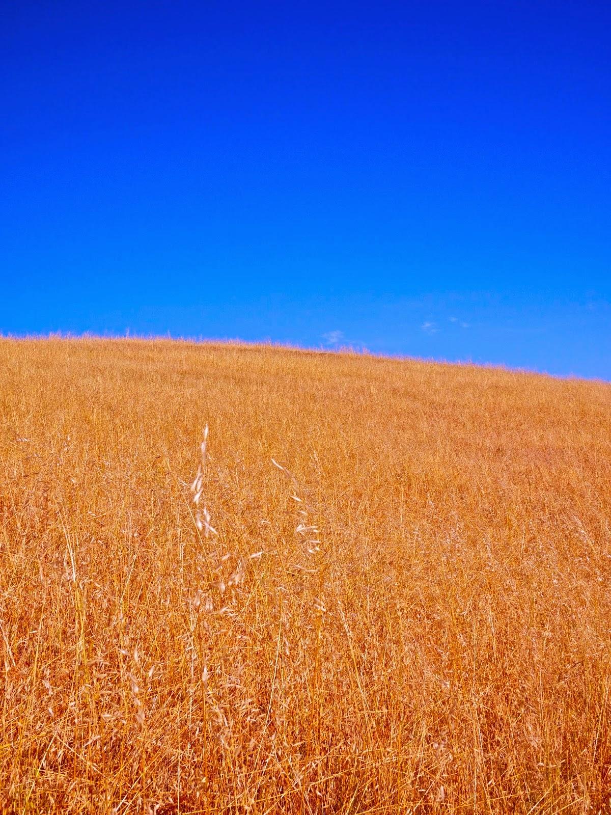 Grass - Mt. Tamalpais