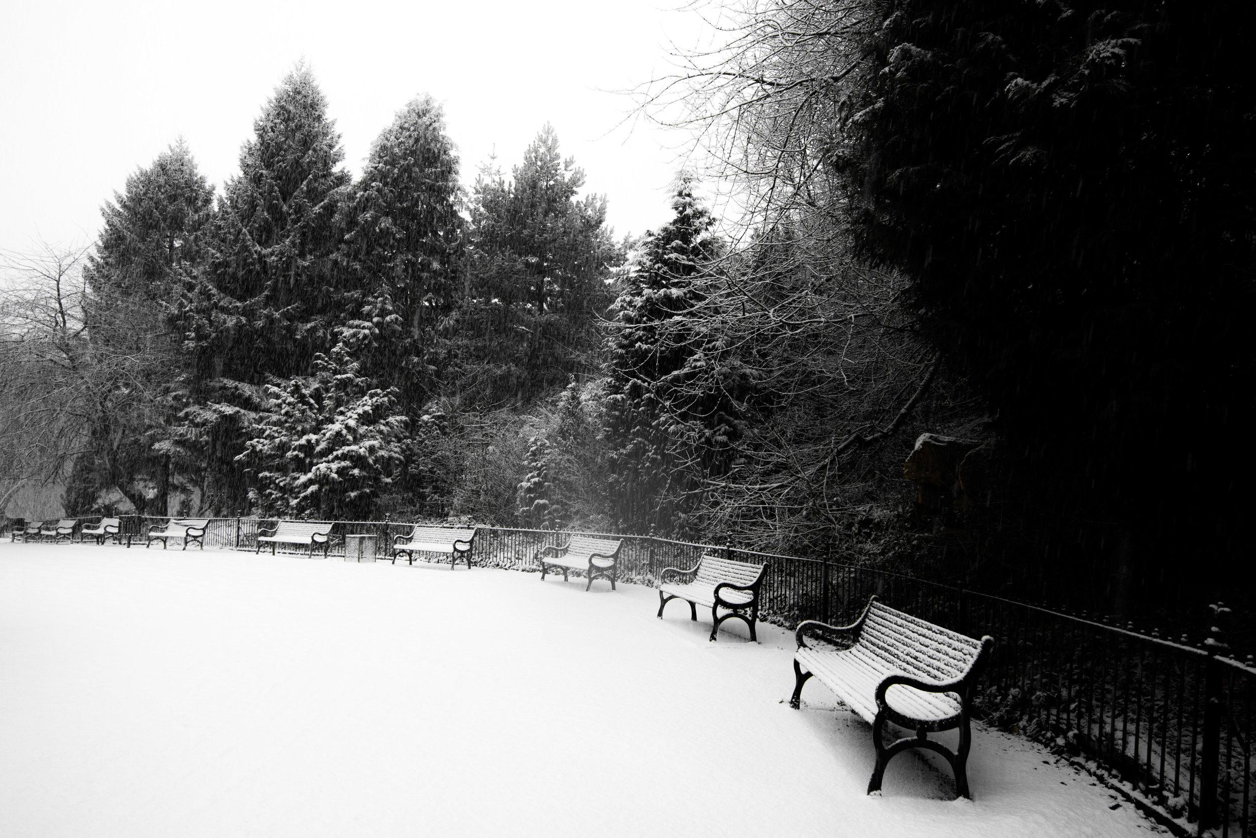 snowDay-12.jpg