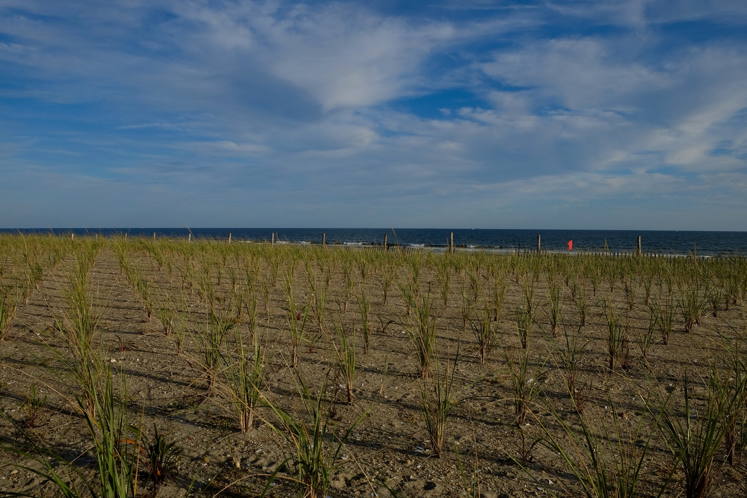 Rockaway Sea Grasses