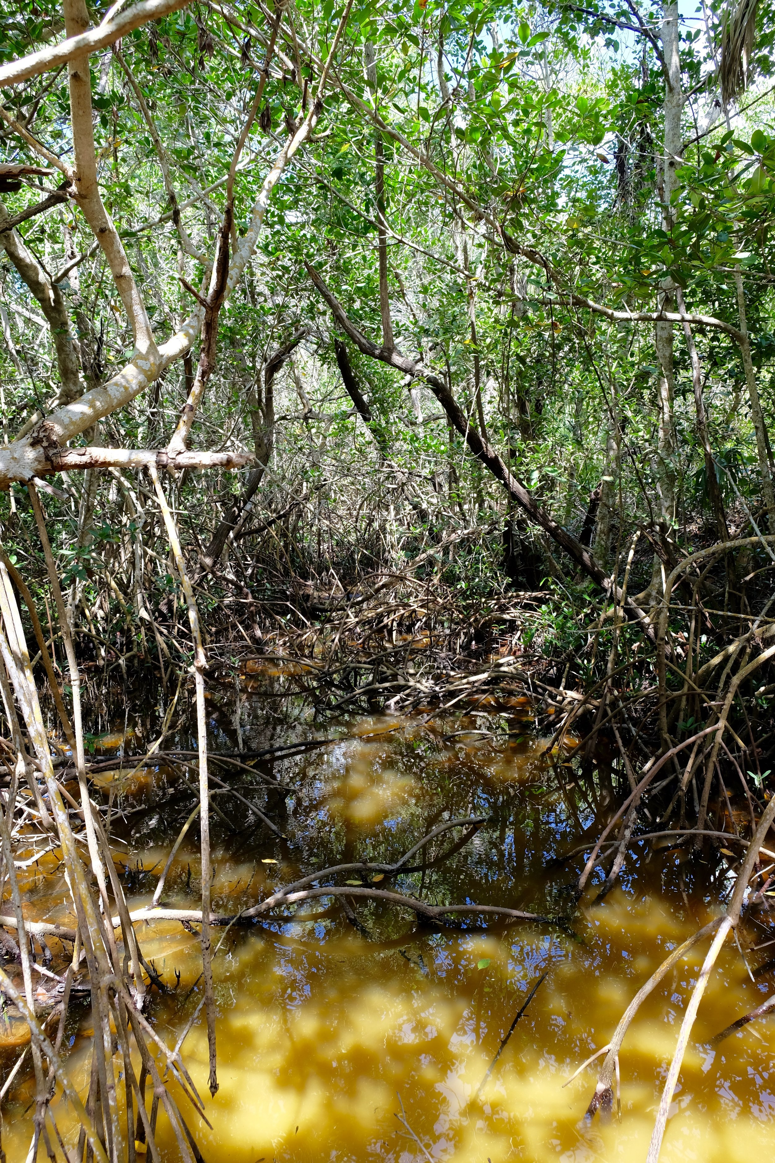Matanzas Pass Preserve   Estero Bay