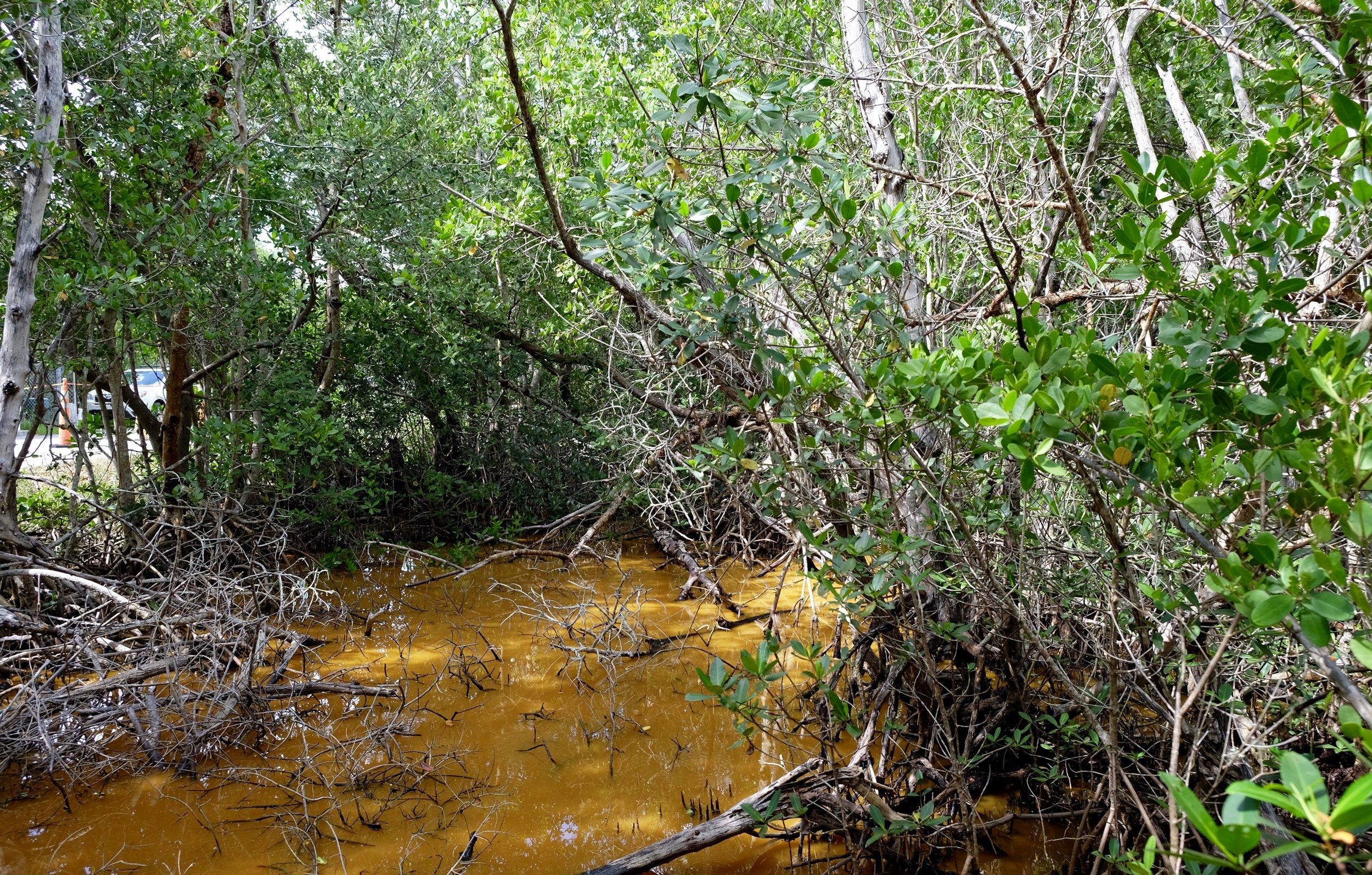 Sanibel Island: Mangroves at the J.N. Ding National Wildlife Refuge