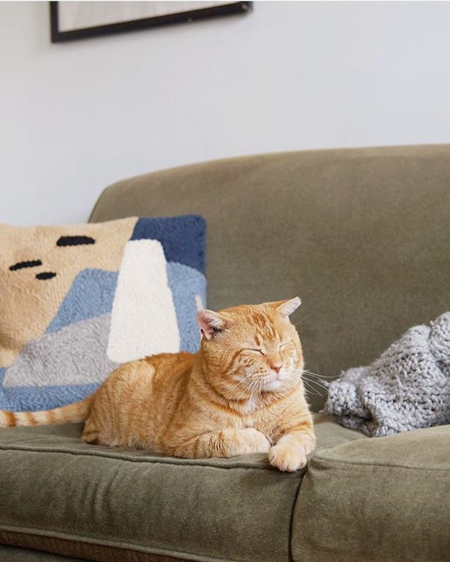our pillow with this cutie at @heidi.systo's home 🐈🥰 #afternoonswimtextile . . #textileart #fiberart #homeinterior #slowtextile #lifestyle #kinfolkhome #rughooking #punchneedle #handwoven #textiledesign