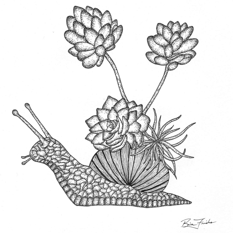 Succulent Snail #1