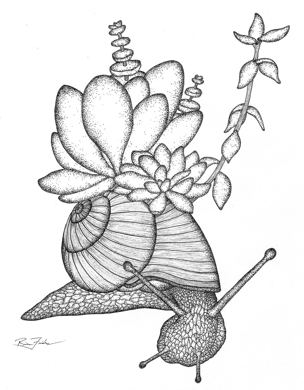 Succulent Snail #2