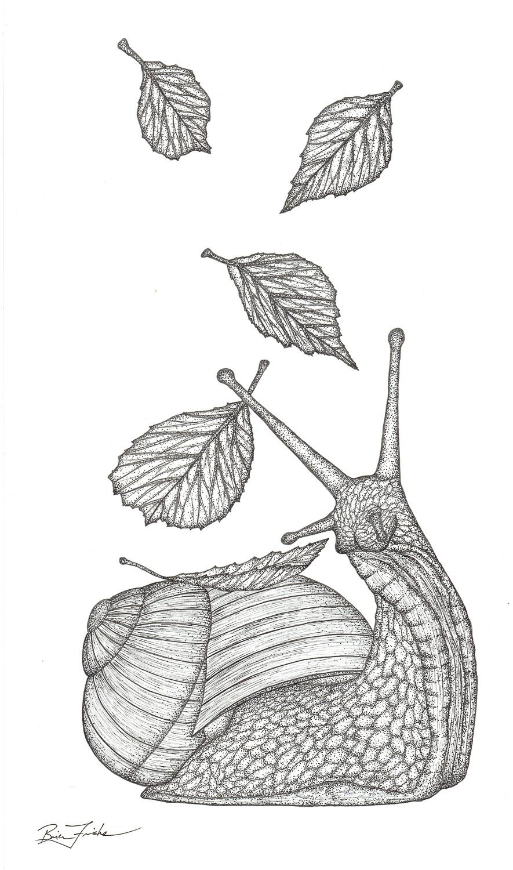 Leaf Snail