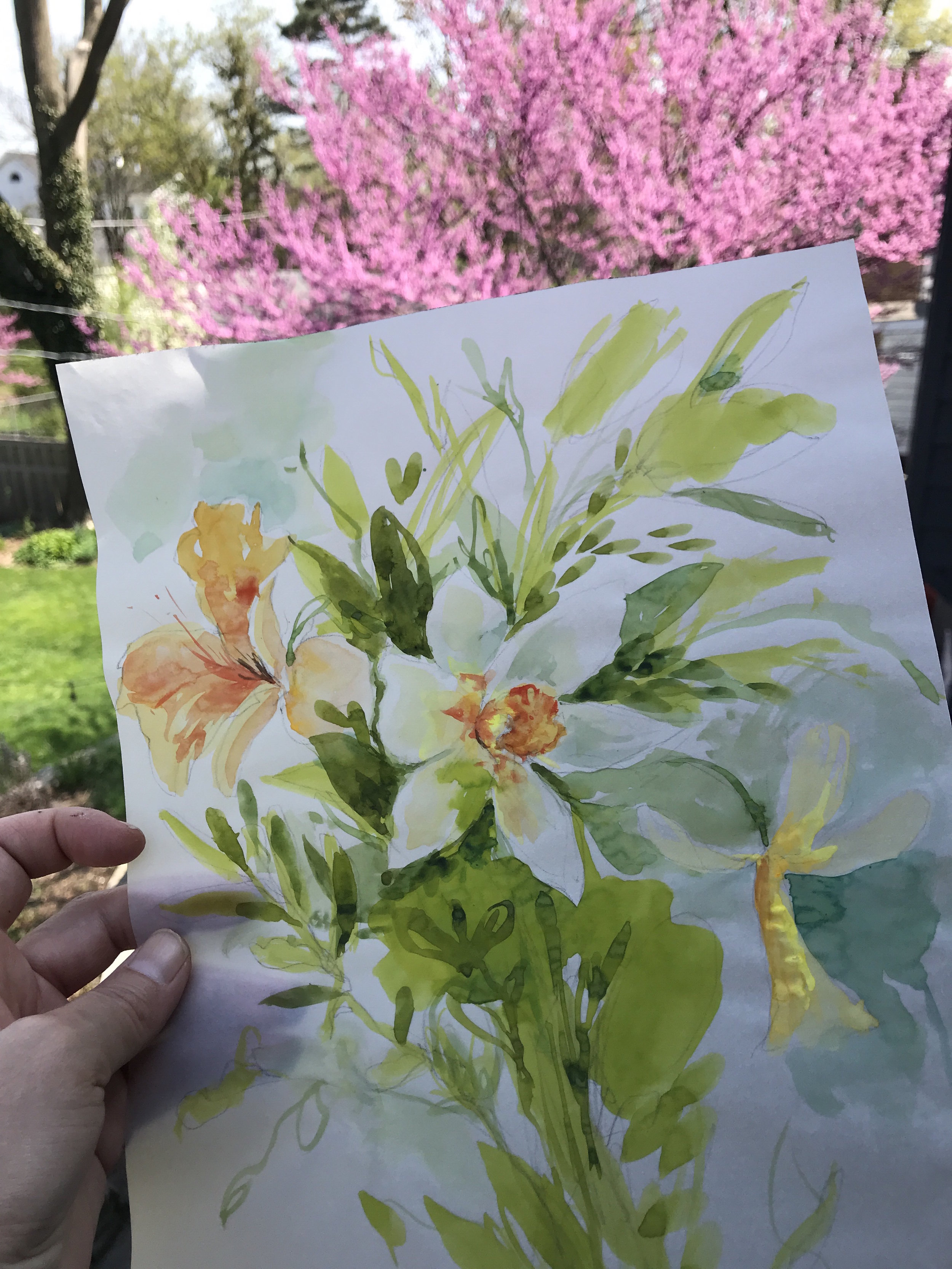 Jonquils- painted from my backyard and redbud in background