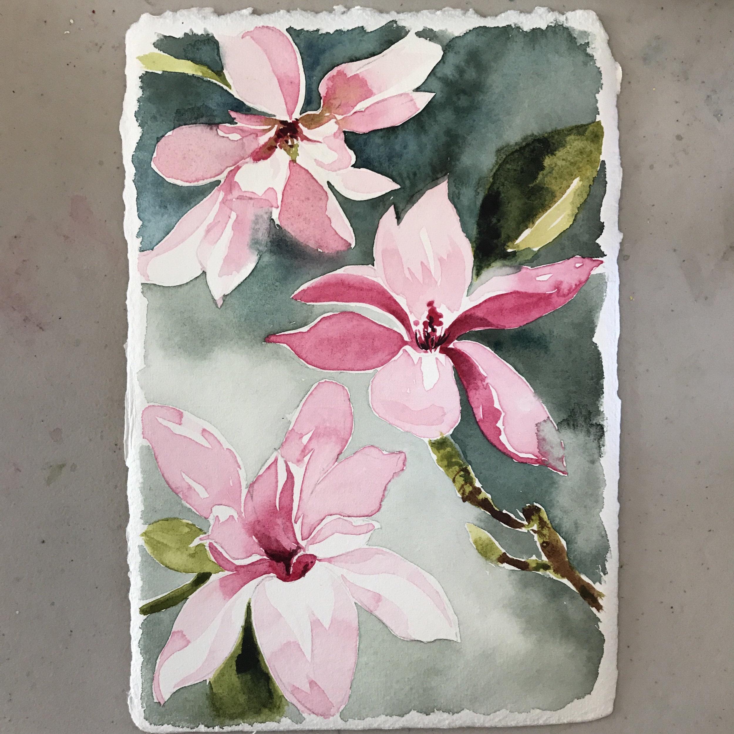 Magnolias from my neighbors yard