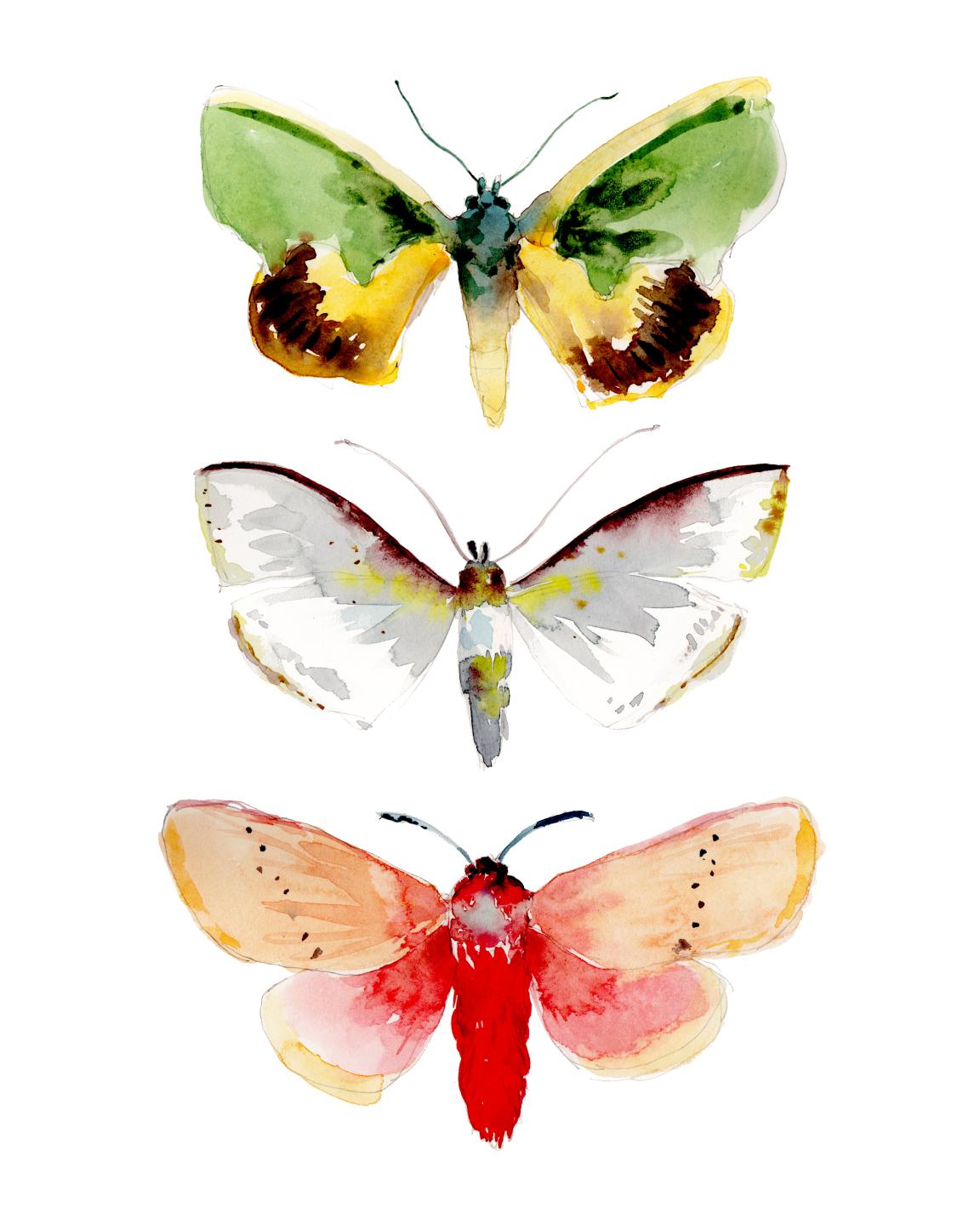 Specimens.jpg