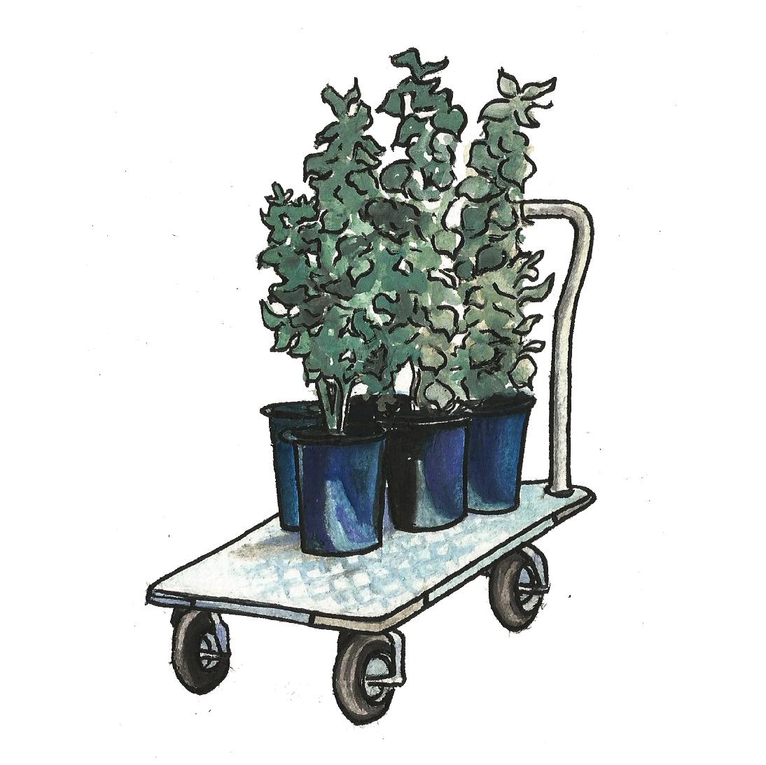 Miracle Legumes 2