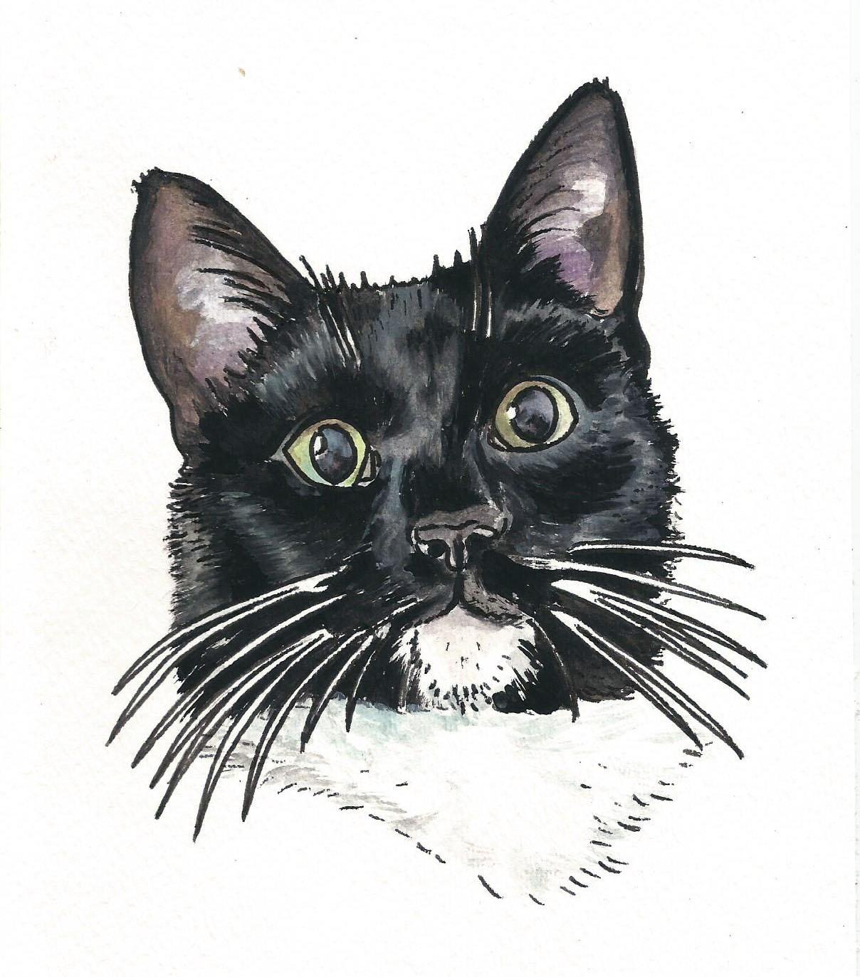 black and white cat.jpeg