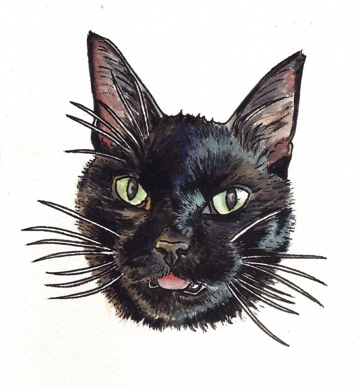 black cat.jpeg