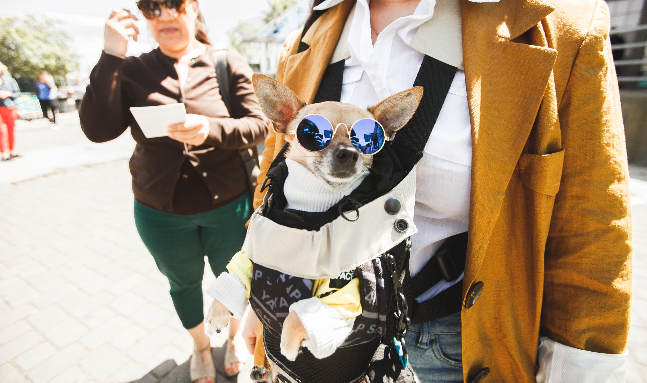 Festival Fashion Dog Chihuahua
