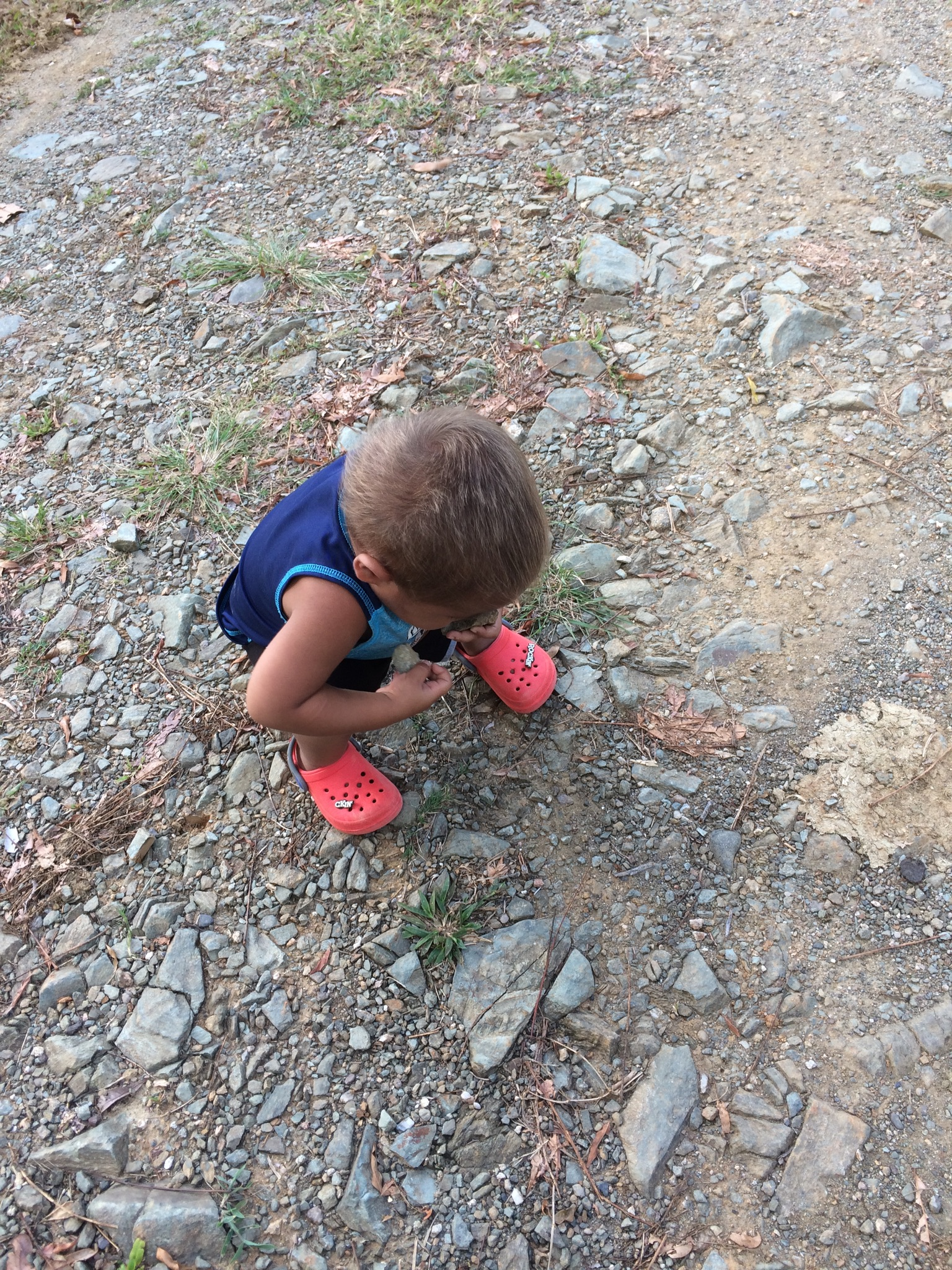 On our walks,he likes to pick up rocks!
