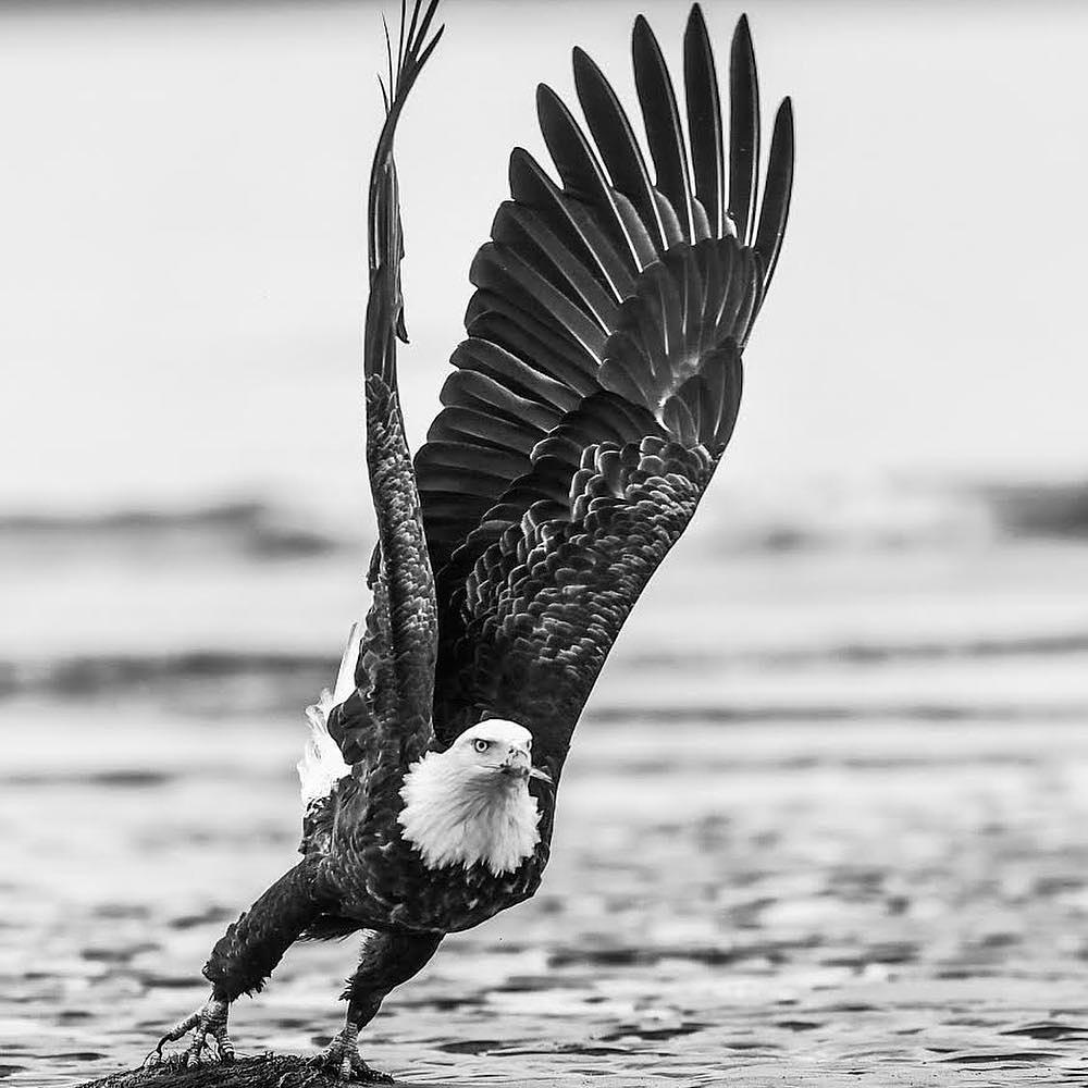eagle - david yarrow.jpg