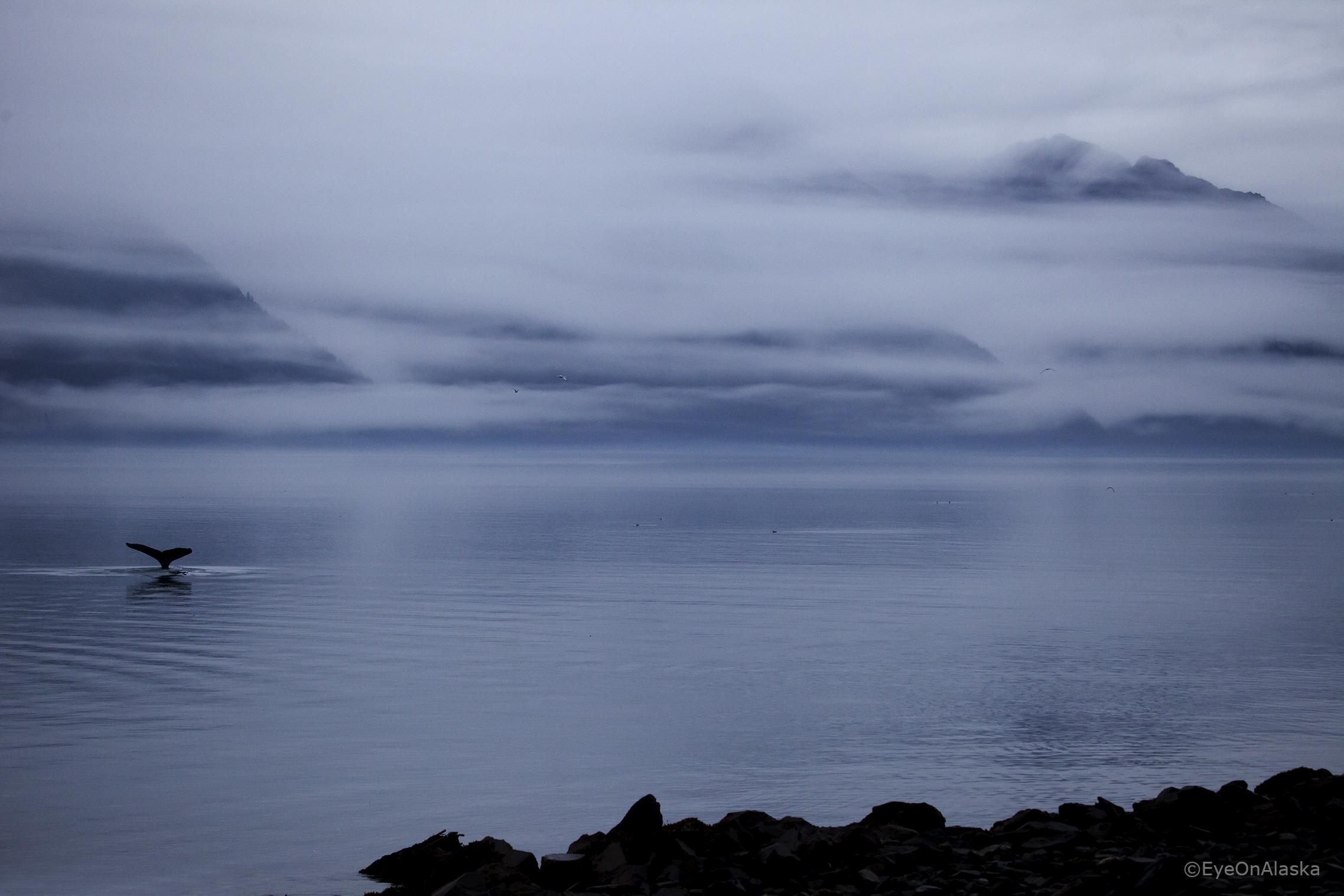 Whale Tail, Seward AK.