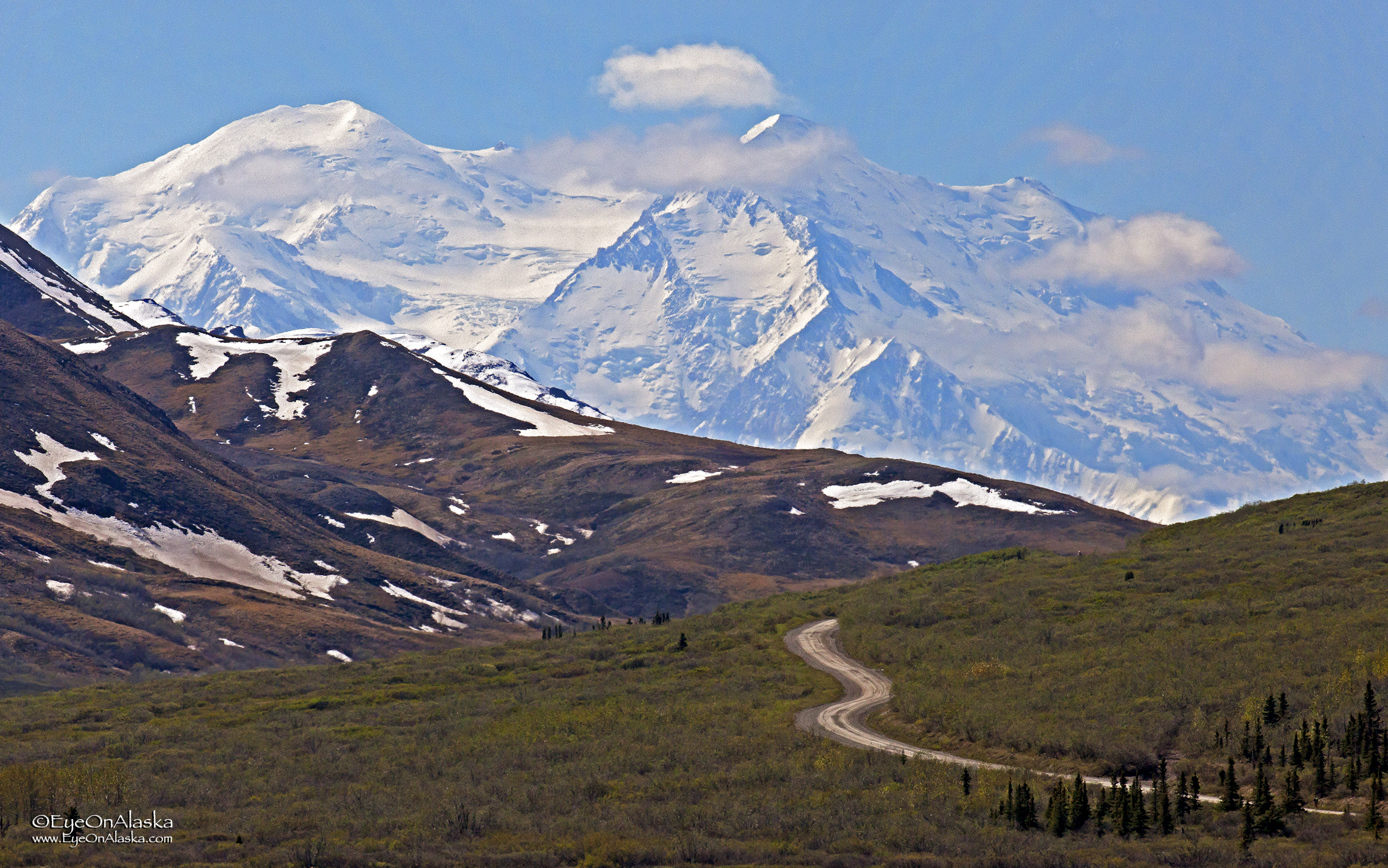 Denali from Toklat