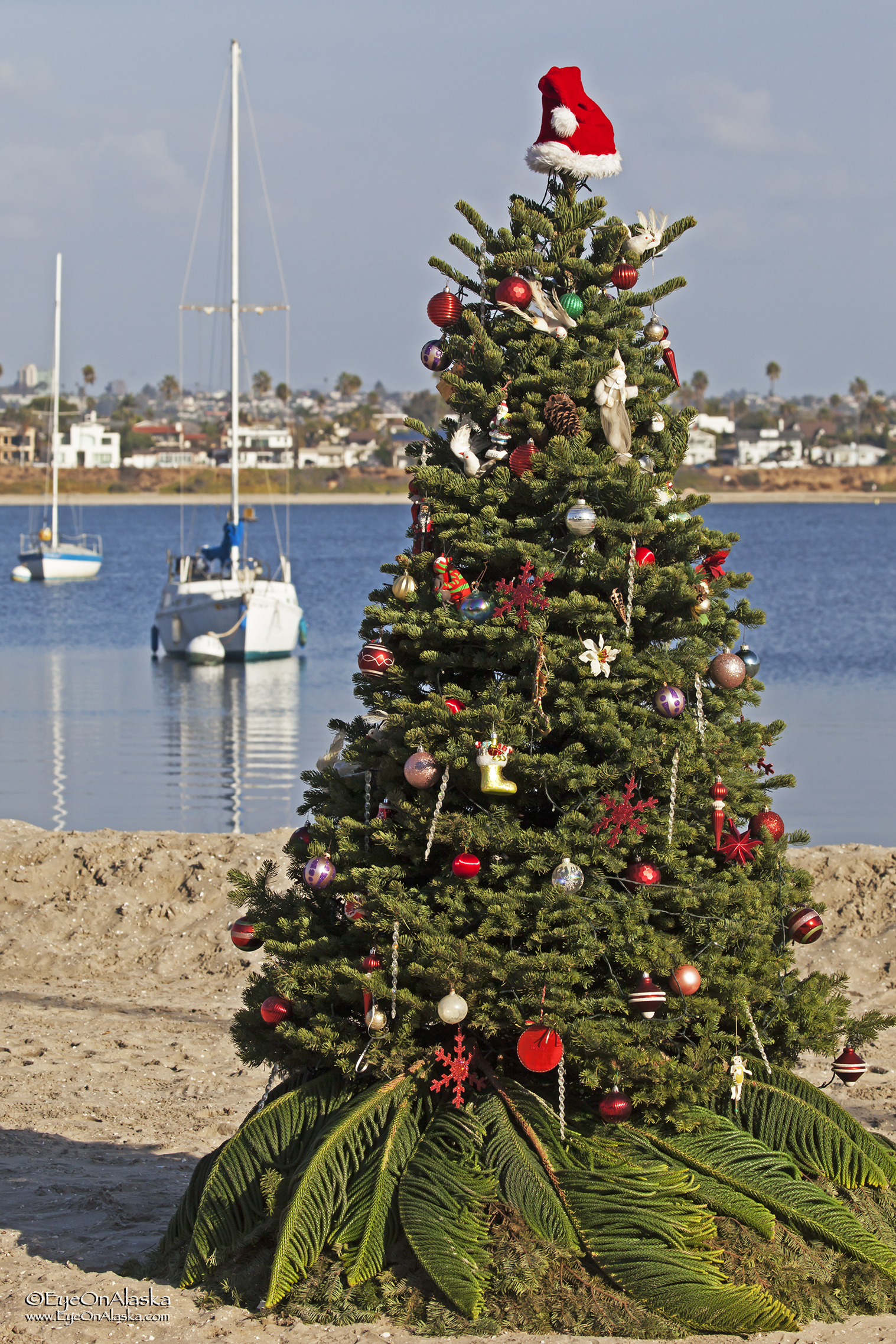 Mission Bay christmas.