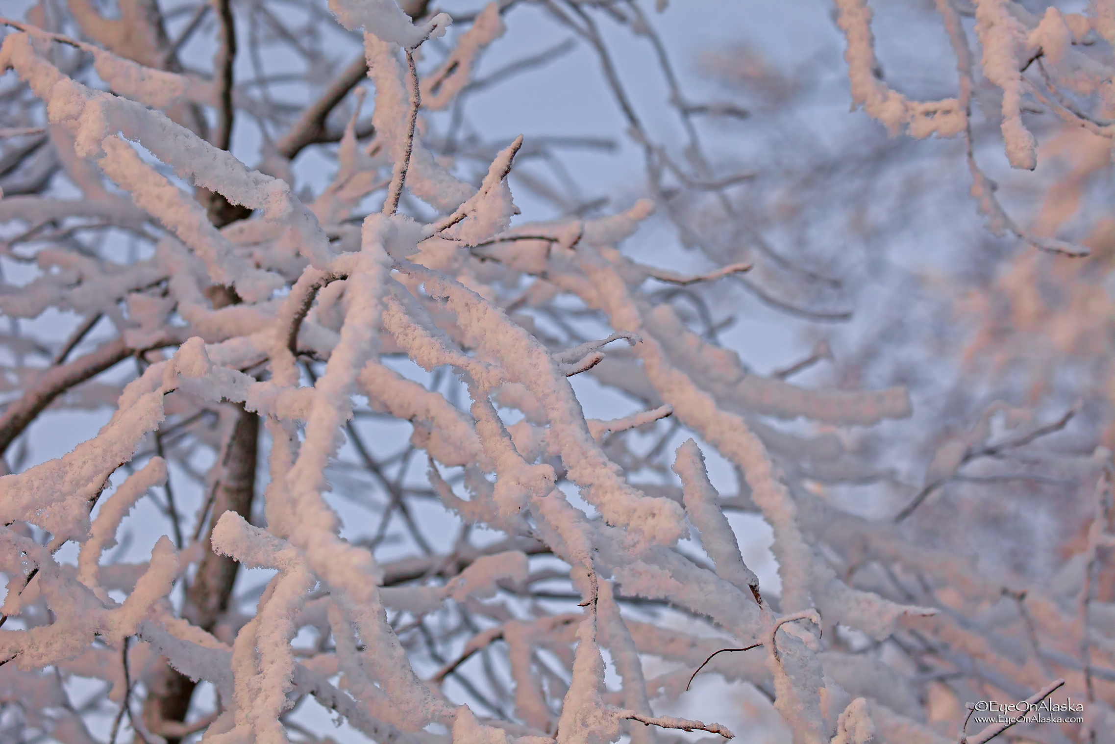 A thick coating of hoarfrost on everything.