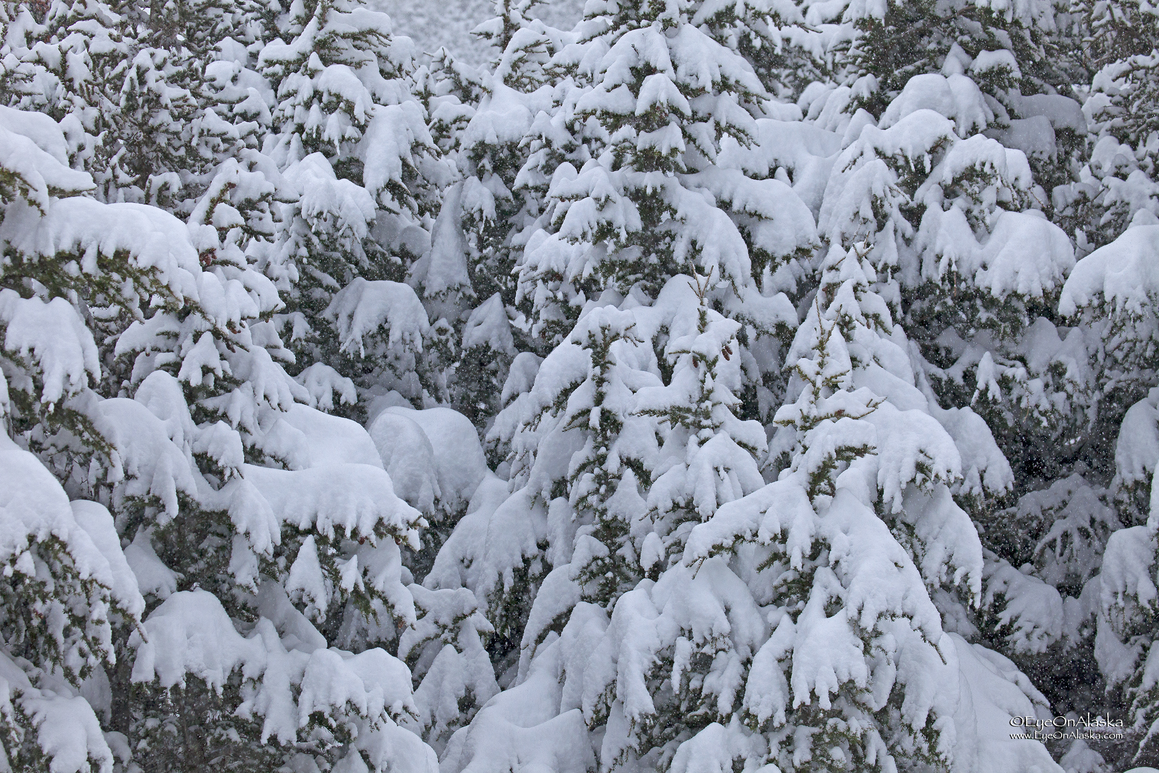 Everything draped in a quiet blanket of falling snow.