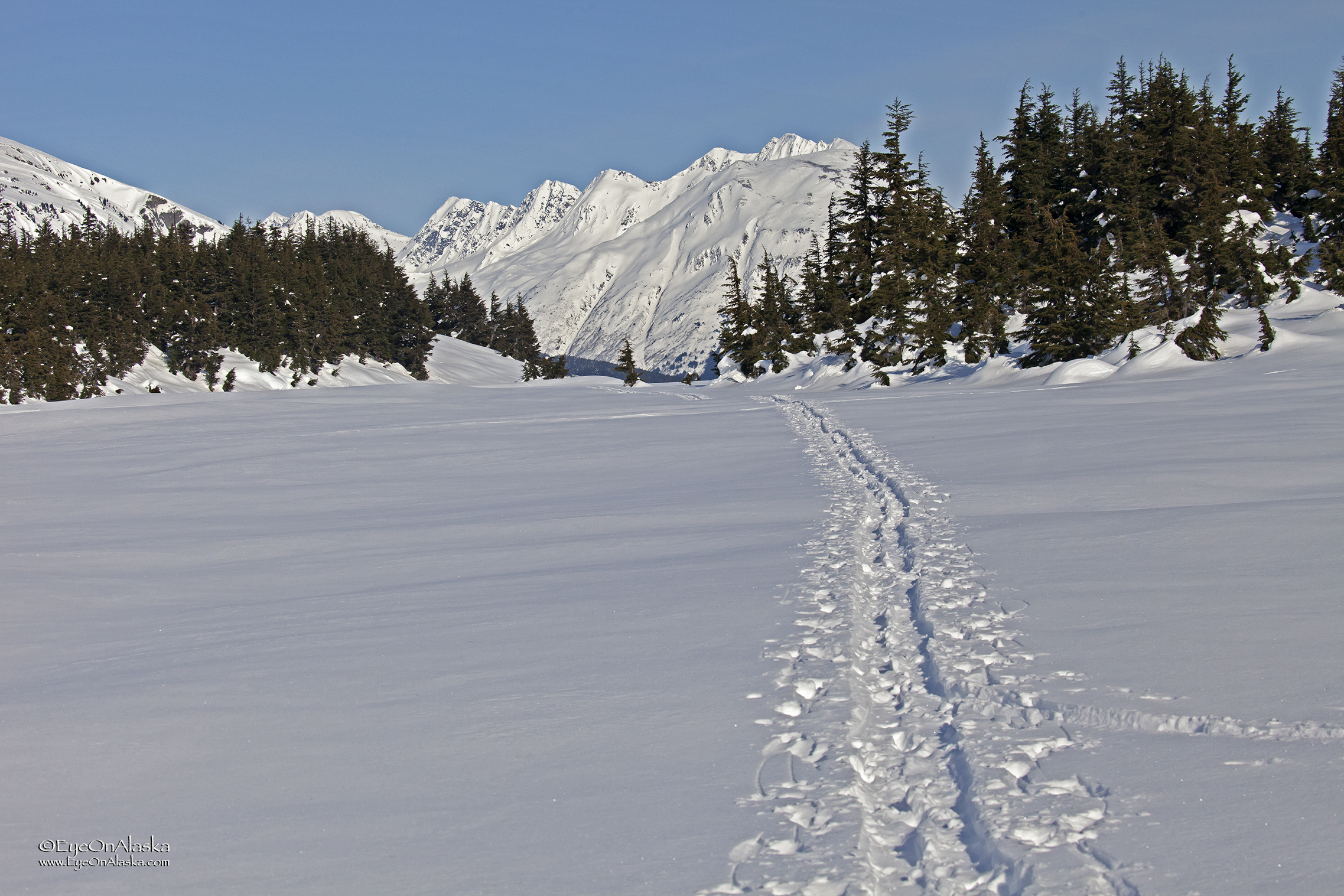 One set of older tracks leading exactly where we wanted to go.  Made it much easier for Xena to skijor.