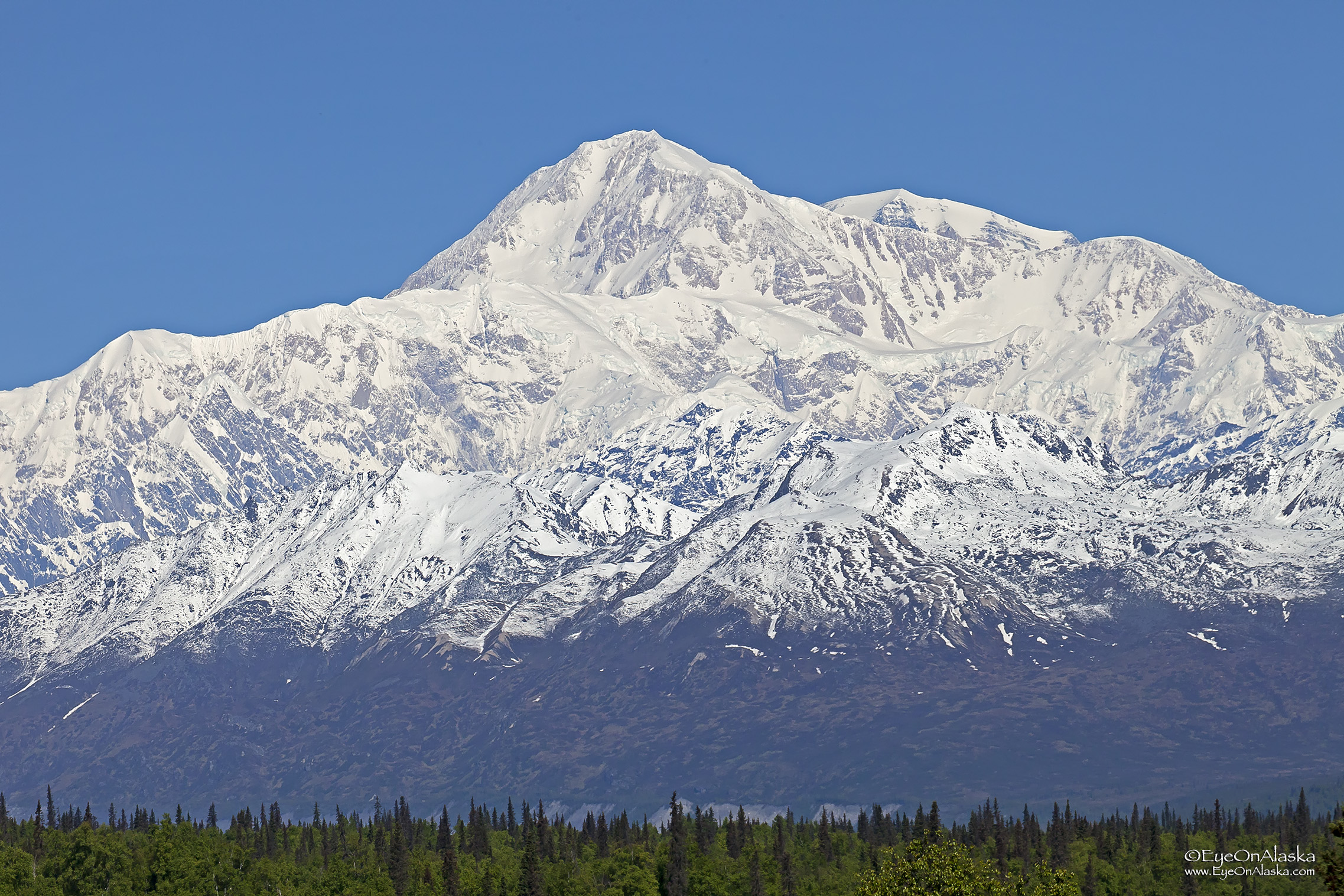 Denali in all her glory on the drive up.  It doesn't get any clearer than this.