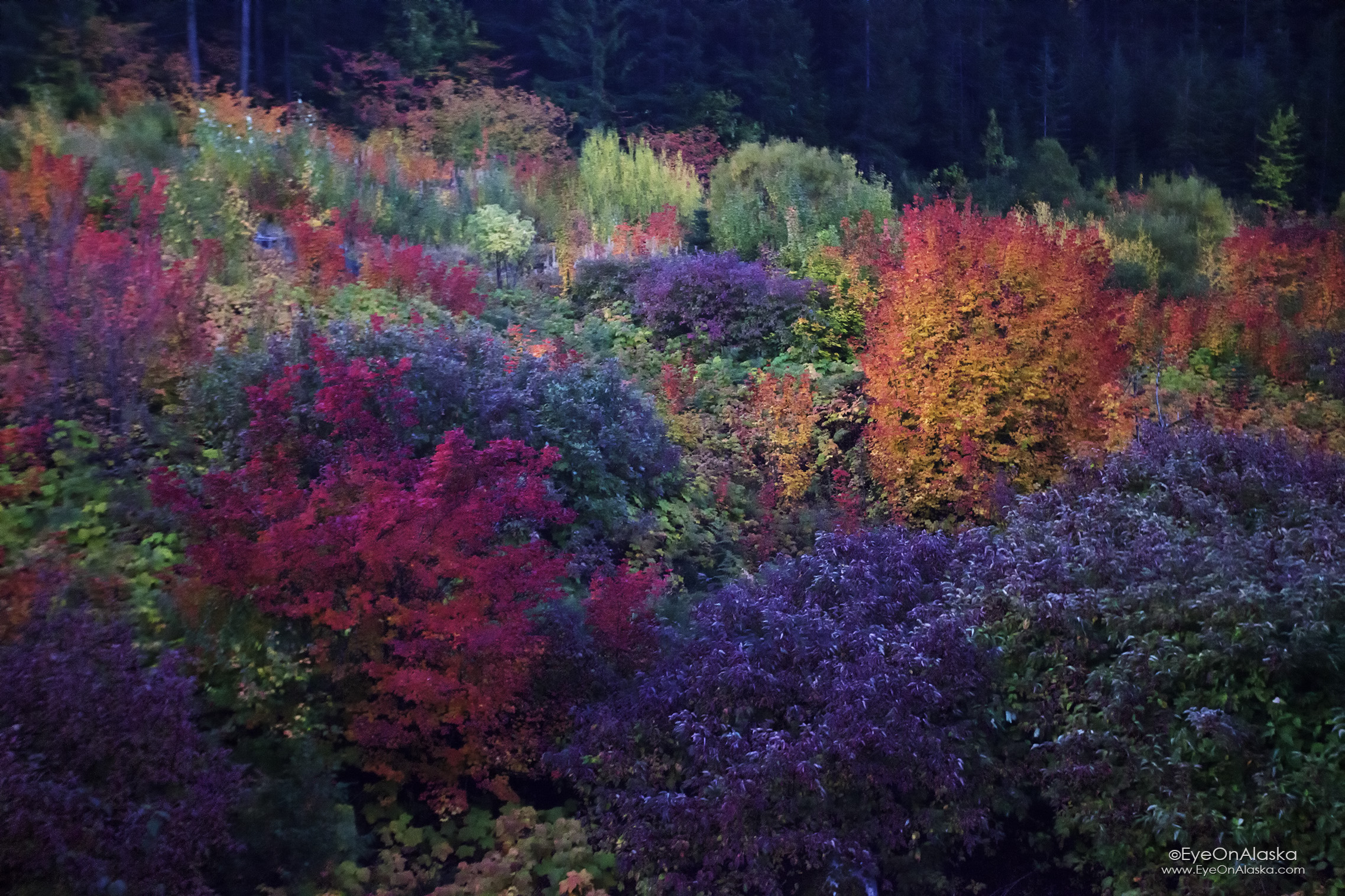 A last intense burst of early morning color somewhere in Western Washington state.