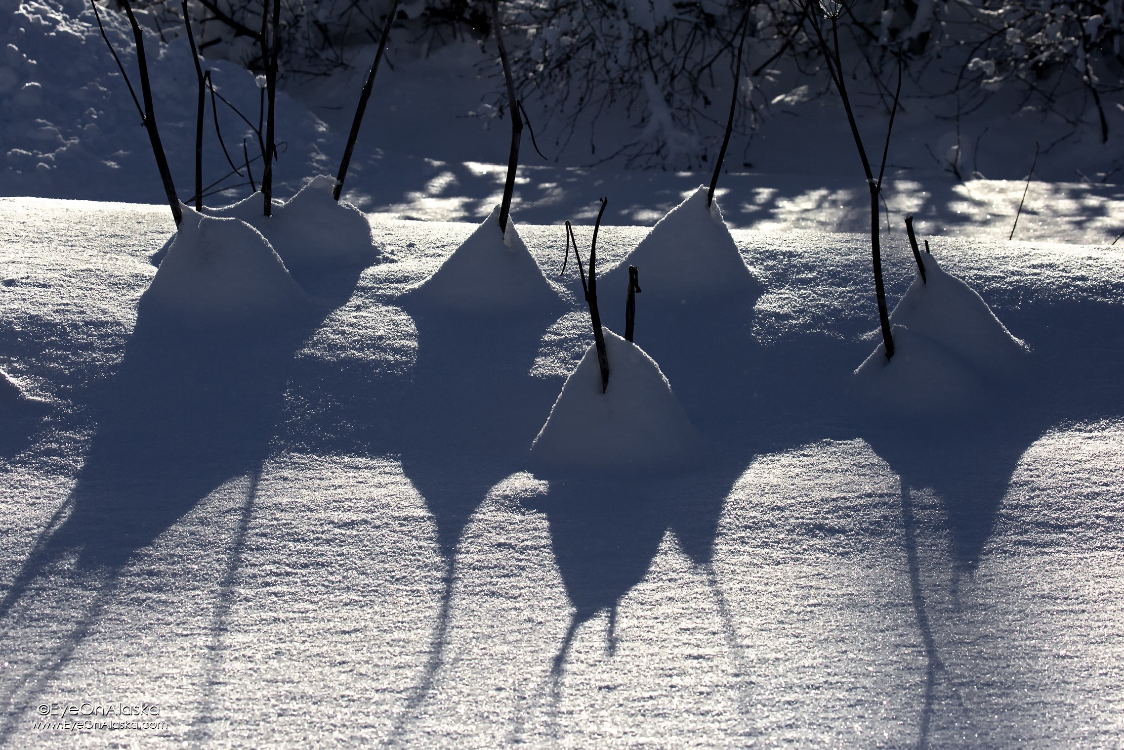 Today was all about sun and shadows. There was a lot more snow in Portage Valley than here in Bear Valley.