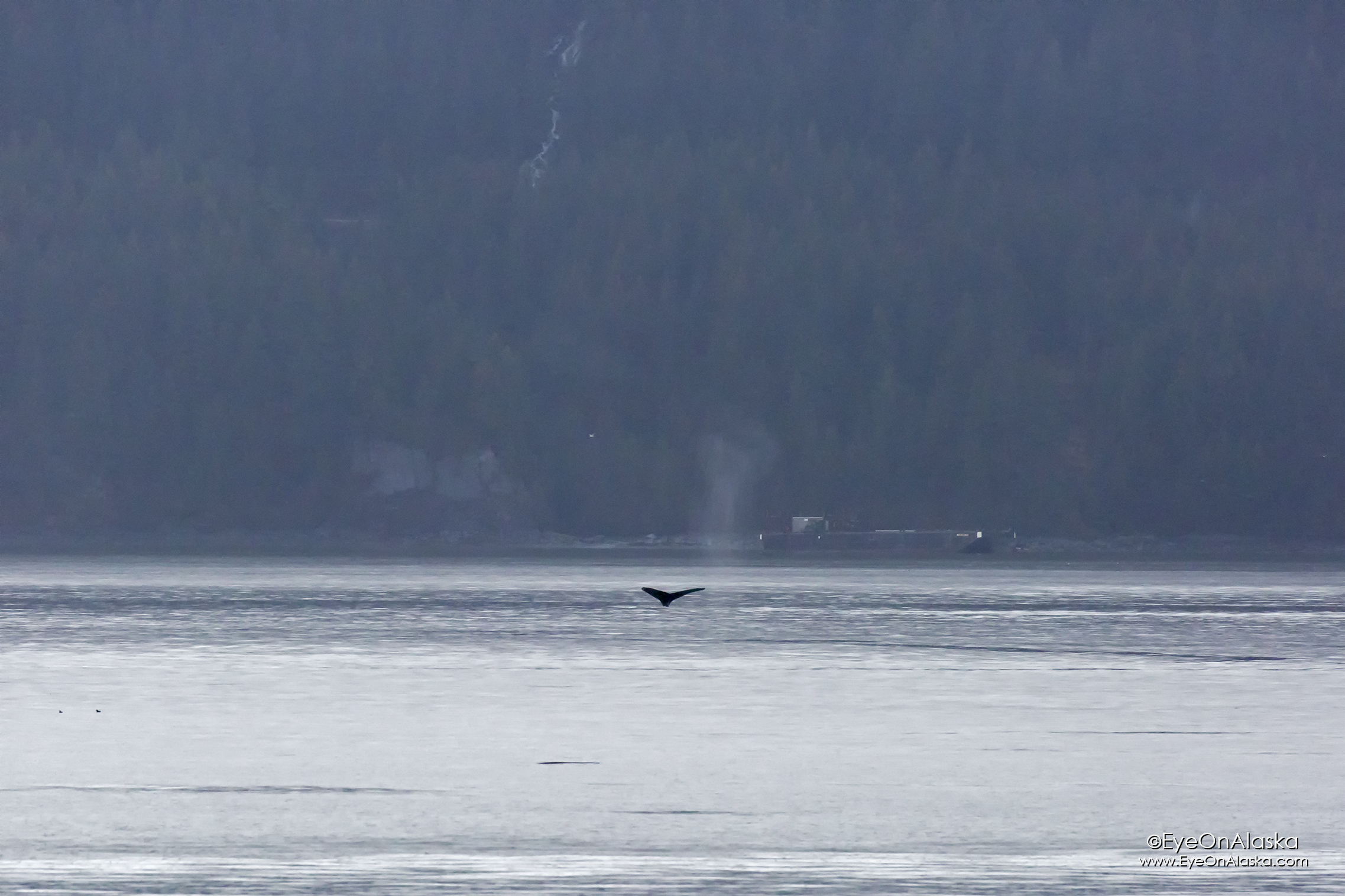 First whale sighting of the year.