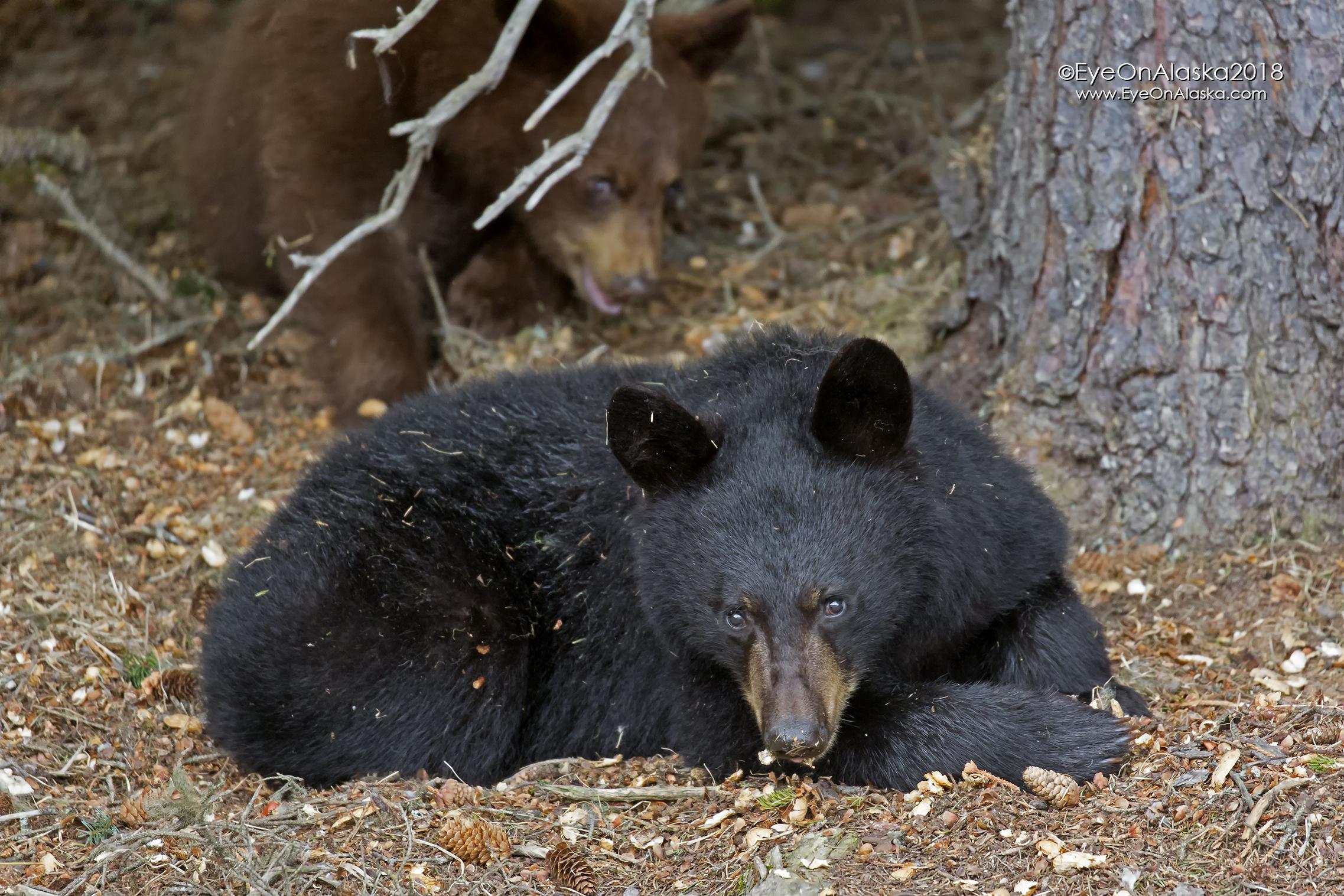 The black cub.