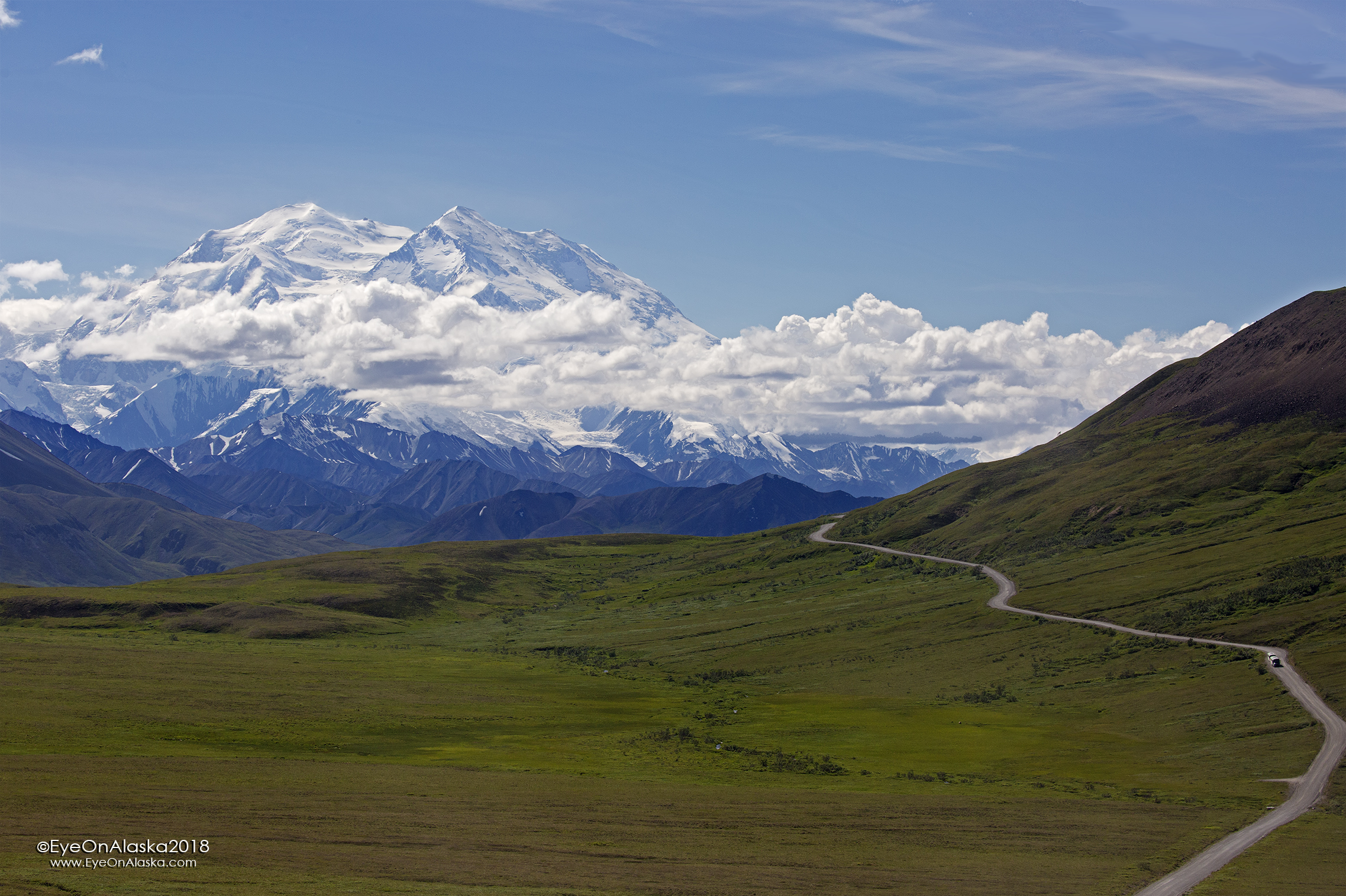 Denali is out and showing off! What a beautiful day. There's a surprise in store as well.  There are a couple of buses pulled over down on the flats looking at something.  Usually means there's an animal around.